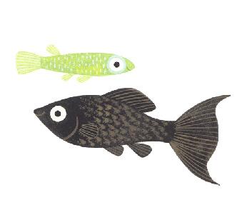 Aquatic Husbandry